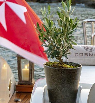 m:y COSMOS - 11 Yachts